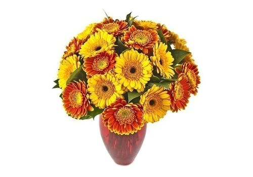 yellow orange gerberas
